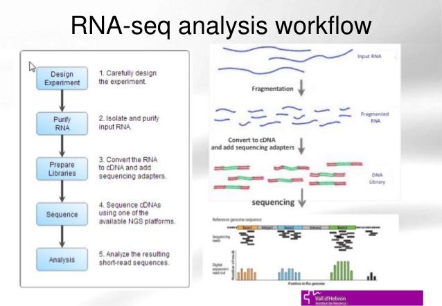 توضیح روش و مراحل انجام روش RNA-seq