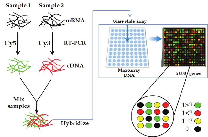 معرفی تکنیک میکرواری (microarray) یا ریزآرایه و کاربردهای آن در سنجش بیان ژن ها