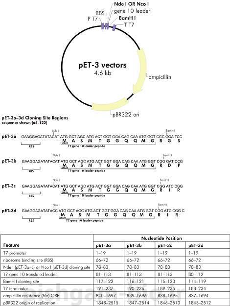نقش توالی اتصال ریبوزوم (RBS) در کلون نمودن و بیان ژن های نوترکیب